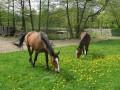 fotki-maj-2008-034