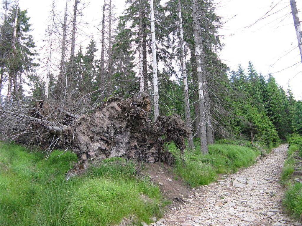 Beskid Śl 266